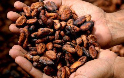kakao - źródło miedzi