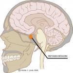 Przysadka mózgowa może mieć wpływ na łysienie