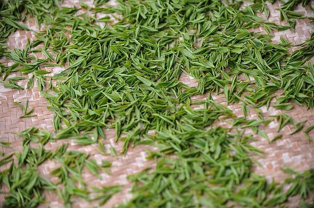 zielona herbata a wypadanie włosów